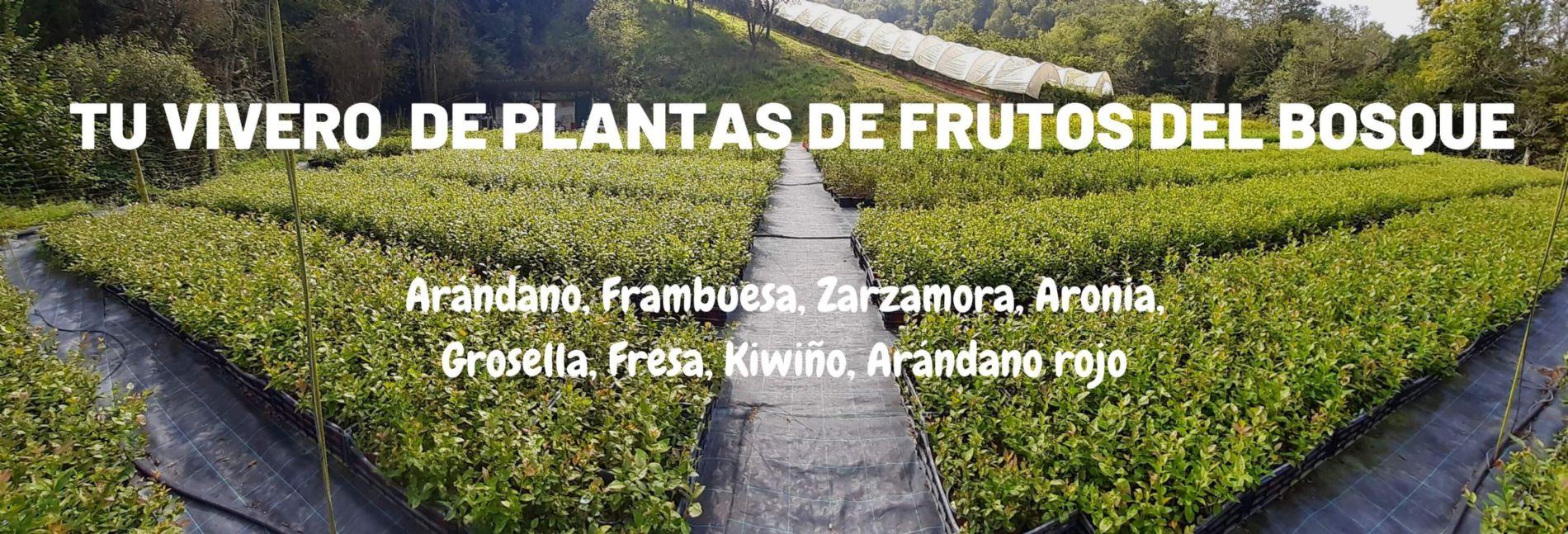 Vivero de plantas frutos rojos Arándanos el Cierrón