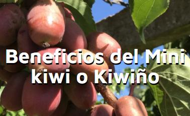 Beneficios del mini kiwi o kiwiño