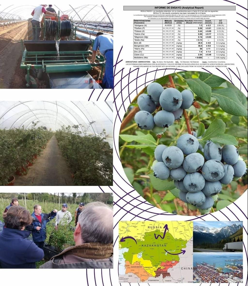 Consultoría agronómica bayas frutos rojos