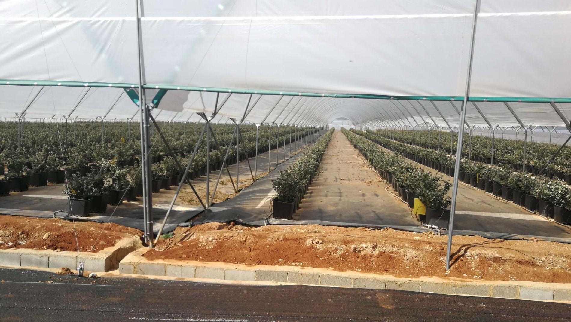 Consultoría - formación en cultivo de arándanos en maceta