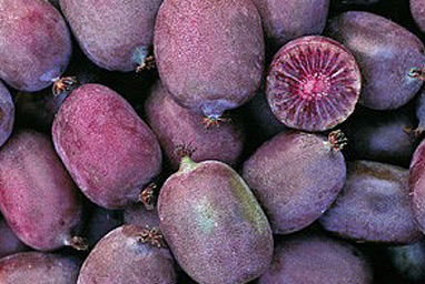 Venta online de plantas de mini kiwi Ken`s Red