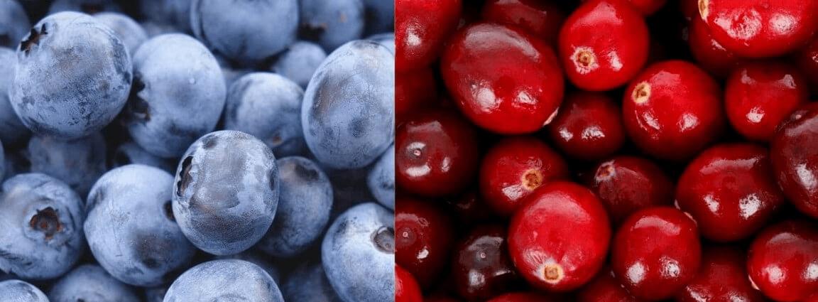 Venta online plantas de arándano rojo y azul