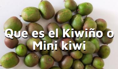 Qué es eñ kiwiño p mini kiwi