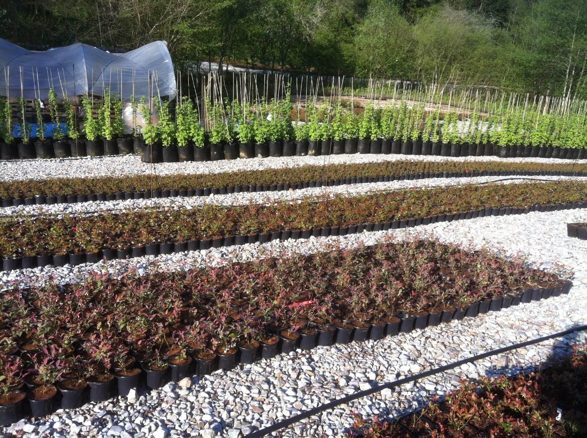 El cierr n vivero de plantas de ar ndanos y frutos del for Viveros en asturias