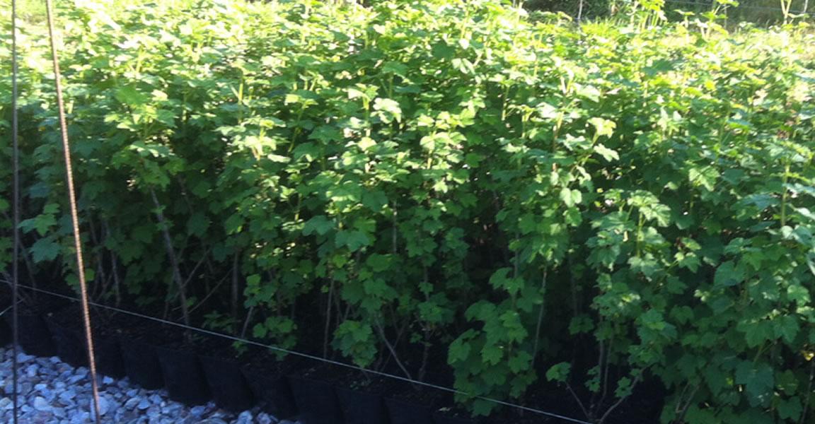 Ar ndanos el cierr n vivero y venta online de plantas for Vivero online arboles
